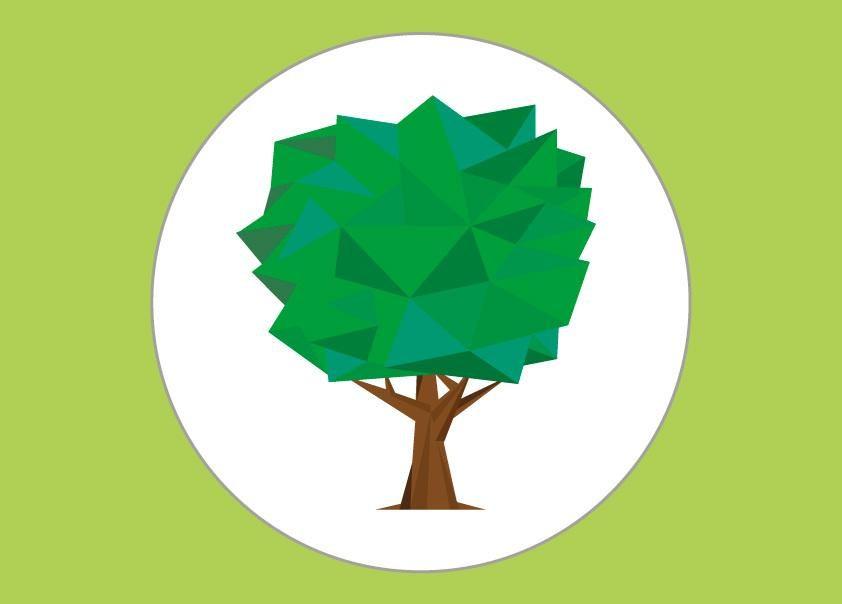 arbre_amazonie_bbb